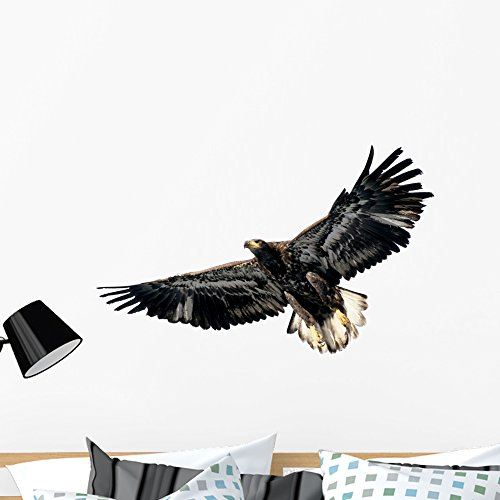 Wallmonkeys Harris's Hawk Wall Decal Peel Stick Animal Graphics (36 in W x 30 in H) WM84921