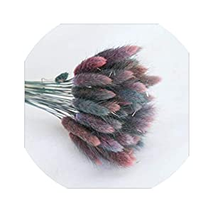 Little-Lucky 60Pcs/Bunch Everlasting Dried Flowers Rabbit Tail Grass Festival Wedding Home Decor Colorful Real Flowers 18