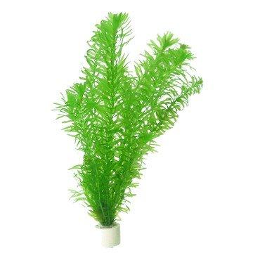 Egeria densa/Elodea densa - Plantas de Acuario - 1 Bunch: Amazon.es: Productos para mascotas