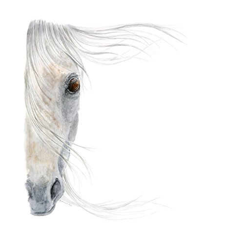 White Arabian Horse Watercolor Home Decor - Equestrian Art - Available In Various Sizes