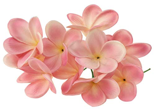 - BABYHYY 10 Stems Real Touch Artificial Hawaiian Lei Faux Ivory Plumeria Latex Flower Bouquet Bride Wedding Party Festival Decoration Bouquet (Pink)