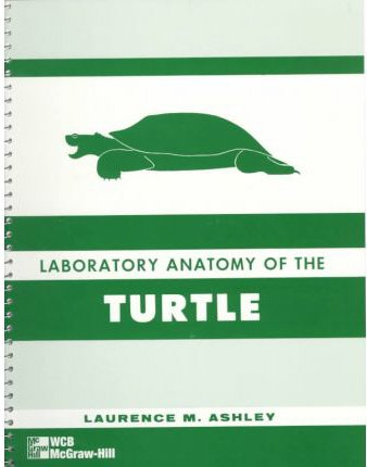 Lab Anatomy of The Turtle