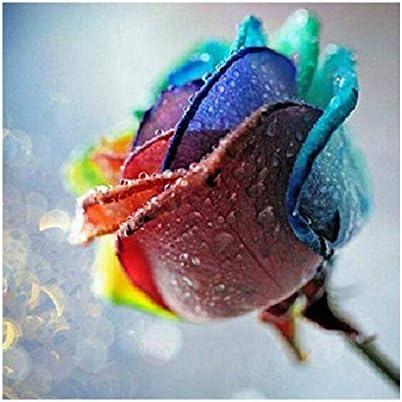 Kit de Broderie Diamant 5D pour Adultes et Enfants Broderie Diamant Complet Peinture Rose par Num/éros Broderie au Point de Croix Puzzles en Mosa/ïque Diamant pour Bureau D/écoration Murale 30 x 50 cm