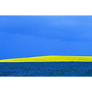 'Canola and Flax' by Mike Grandmaison