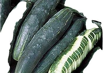 10 Samen Ungarische grosse schwarze Zucchini samenfest von unserer Farm