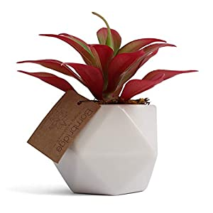 Bornbridge Artificial Succulent - Fake Succulent in Planter - Faux Succulent with Ceramic Geometric Planter - Artificial Potted Plant 26