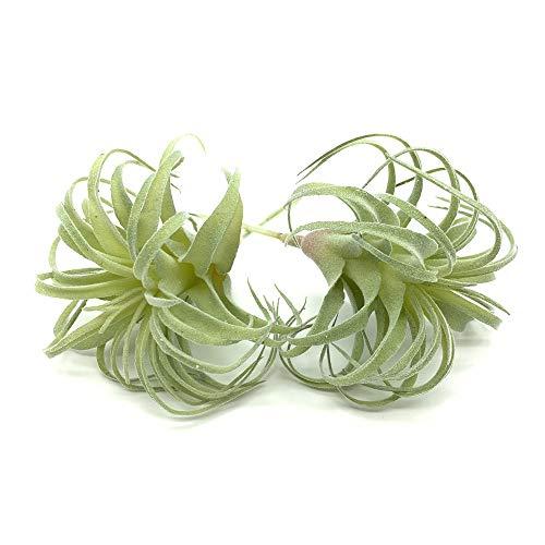 EBUYOM 2 PCS Artificial Succulents Plants Real Touch Lifelike Succulants Plants Faux Greenery Plants Garden DIY Home…