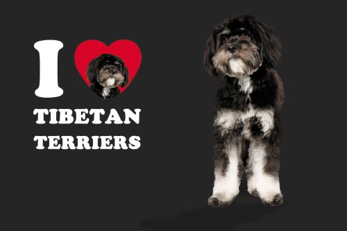 Tree-Free Greetings SG25133 I Heart Tibetan Terriers Sip 'N Go Stainless Lined Travel Tumbler, 16-Ounce, Black and White 5