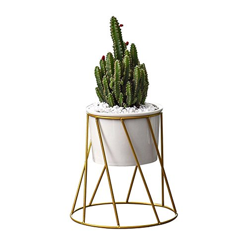 Planter Pots Indoor,Y&M(TM) 6.2 inch Mid Century Modern Planter Round Plant Pots with Metal Rack for Succulent Planter Cactus (White+Gold) by MyM