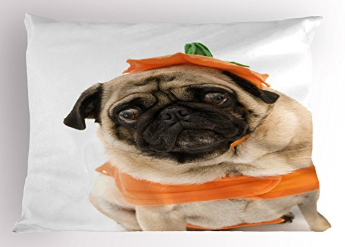 26 Pug Costumes (Pumpkin Pillow Sham by Lunarable, Pug with a Pumpkin Costume for Halloween Trick or Treat Cute Animals Photo, Decorative Standard Queen Size Printed Pillowcase, 30 X 20 Inches, Ivory Orange Black)