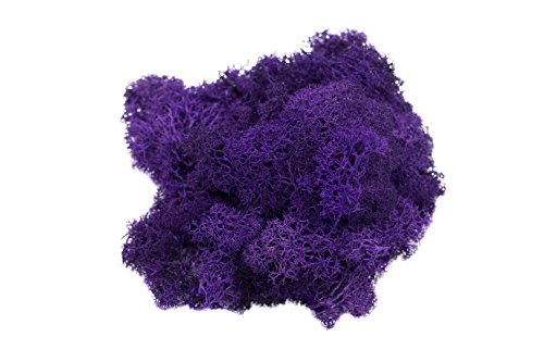 Reindeer Moss Preserved | Purple Moss | For Fairy Gardens, Terrariums, or any Craft or Floral Project | Nautical Crush Trading TM (2 Ounces)