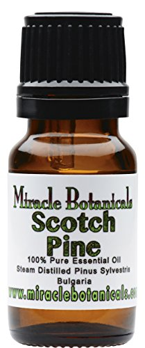 Miracle Botanicals Wildcrafted Scotch Pine Essential Oil - 100% Pure Pinus Sylvestris - Therapeutic Grade - 10ml