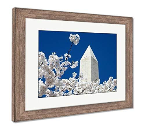 Ashley Framed Prints Cherry Blossoms Near top of The Washington Monument in Washington DC, USA, Wall Art Home Decoration, Color, 30x35 (Frame Size), Rustic Barn Wood Frame, AG32943764 (Best Vacations Near Washington Dc)