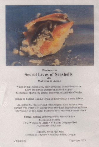 (The Secret Lives of Seashells: Mollusks in Action (Bailey-Matthews Shell Museum, Sanibel Island))