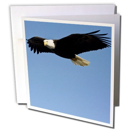- 3dRose Greeting Cards, Homer, Alaska - Na02 Dno0622 Bald Eagle (gc_84013_2)