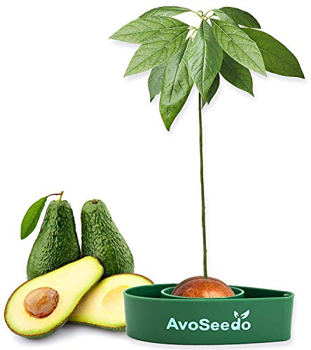 AvoSeedo Avocado Tree Growing Kit – Practical Gardening Gifts for Women/Grow Avocado Plant Indoor with Unusual Pit Grower Boat/Kitchen Garden Seed Starter/Gift for Mom Dad Sister & Best Friend