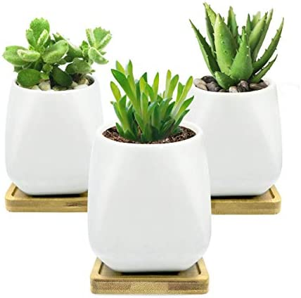 QIANTAO Succulent Pots,White Modern Ceramic Succulent Planter Set Cactus Plant Pots with Drainage Bamboo Tray for Indoor Outdoor Home Garden Office Kitchen