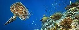 Sea Turtle Aquarium Background 18\