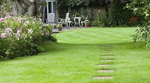 1kg Back Lawn Hard Wearing Tough Grass Seed Ideal for Childrens Play Areas ETC - Supplied by Maltby's of Hull MALTBYS