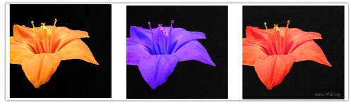 (Amaryllis Tryptic by Kathie McCurdy work, 16 by 47-Inch Canvas Wall)