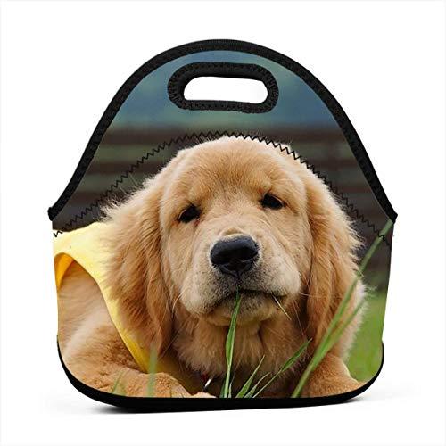 [해외]점심 가방 골든 리트리버 개 미식가 도시락 컨테이너 성인남성여성 일학교식사 준비 점심 컨테이너 컴팩트 Totebag 휴대용 음료 홀더 / Lunch Bag Golden Retriever Dog Gourmet Lunchbox Container for AdultsMenWomen WorkSchoolMeal Prep Lunch C...