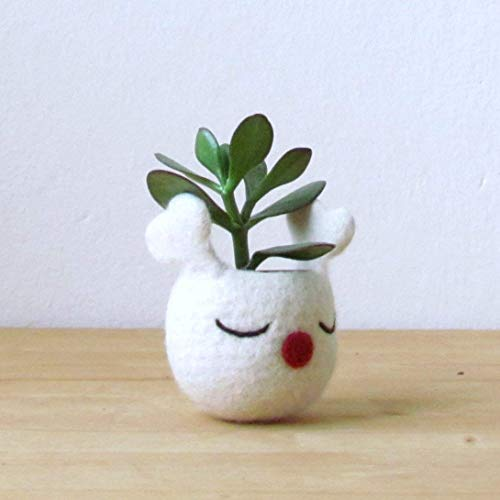 Christmas Succulent Gift.Amazon Com Christmas Gift Idea Succulent Planter White Felt