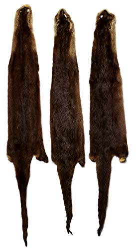 Professionally Tanned Otter Fur 36+ Inches Long - 3 Pack ()