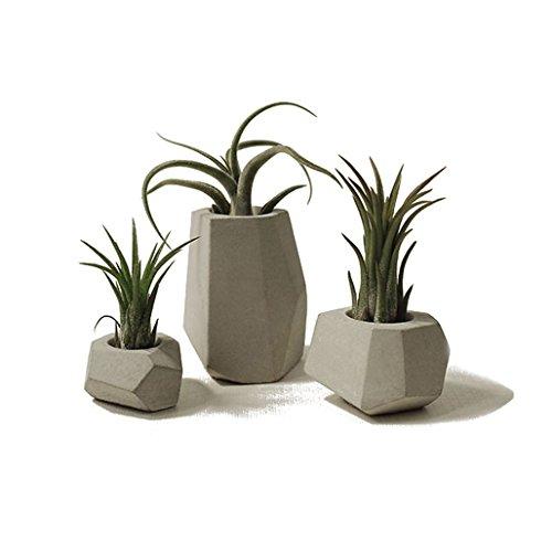 lieomo 3Pcs handmade Mini Modern Geometric Style Conerete Planter