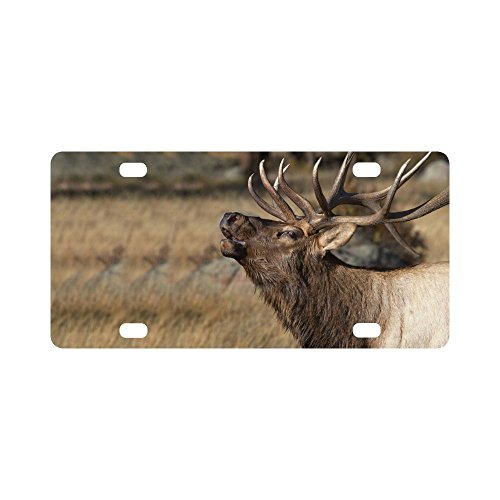 INTERESTPRINT Deer Wilderness Elk in Rocky Mountain National Park Metal License Plate for Car, Metal Auto Tag for Woman Man, 12 x 6 Inch