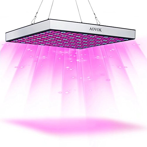 Growing Marijuana Led Grow Lights