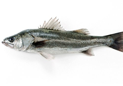 築地魚群 天然 スズキ1尾 国産 1-1.5kg前後サイズの商品画像
