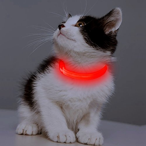 (BSEEN Led Dog Collar XS, USB Rechargeable Glowing Safety Cat Collar Light Up Adjustable Reflective Pet Collar for Small Dog & Cat - Red)
