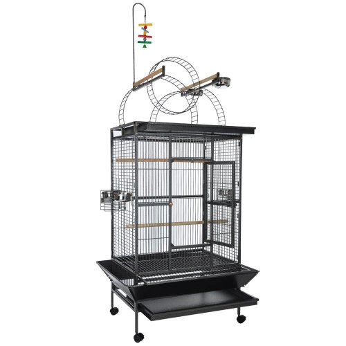 Black vein Deluxe Select Series with Play Top Ladders Parrot