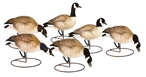 - Final Approach FA Last Pass Hd Lesser Canada Decoy Outfitters Pack, 6 Pack