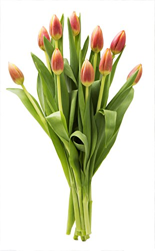KaBloom Orange Tulip Bouquet of Farm-Fresh Tulips (10 Stems) Cut-to-Order and Homegrown in the USA