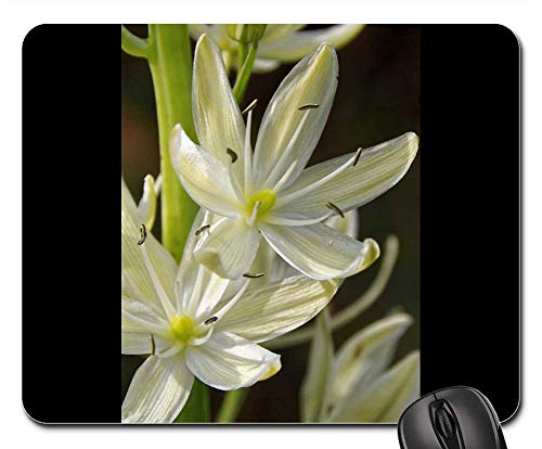 Mouse Pad - Prairie Lily White Flower White Flower Plant
