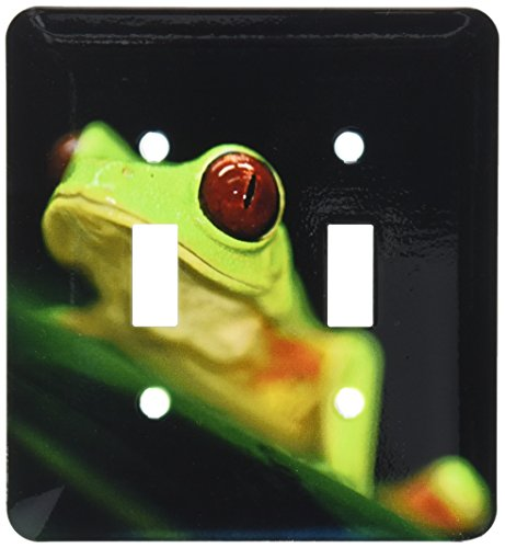 - 3dRose LLC lsp_10383_2 Light green Tree frog on a Leaf, Double Toggle Switch