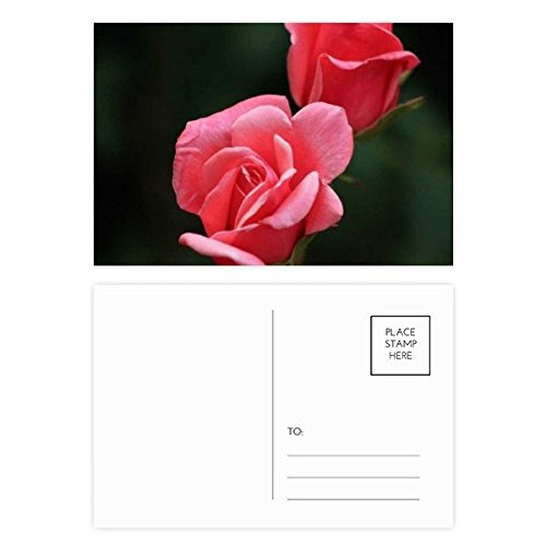 (Pink Red Roses Flowers Postcard Set Birthday Thanks Card Mailing Side 20pcs)
