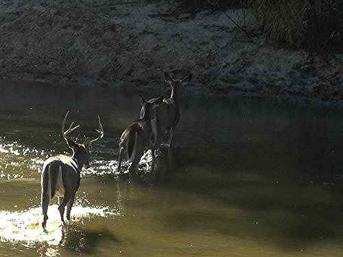 We See 40 Deer In 4 Hours: Hunting Bucks Using the Wind