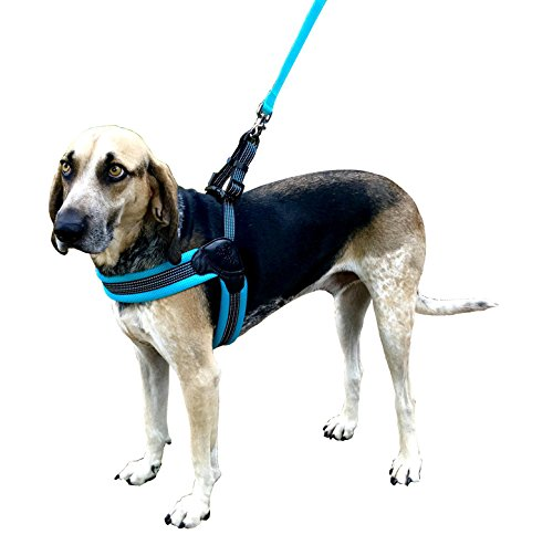 - SPORN Easy Fit Dog Harness, Mesh, Blue, Medium