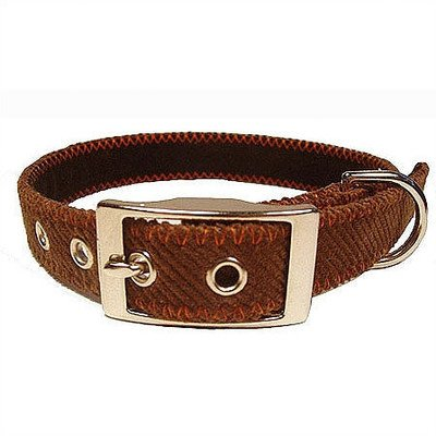 Corduroy Dog Collar Color: Orange, Size: Small