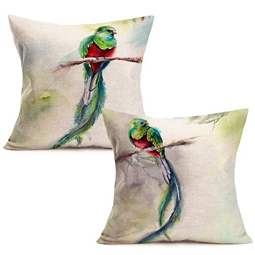 - ShareJ Set of 2 Throw Pillow Cover Resplendent Quetzal Nature Green Bird Pattern Home Decor Cotton Linen Pillowcase Square Size 18 x 18 Inches Cushion Case