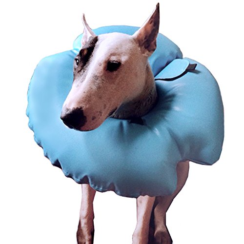 Alfie Pet by Petoga Couture - Berny Inflatable Protective Recovery Collar (for Dogs and Cats) - Color: Blue, Size: M