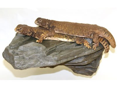 Bestselling Reptile Decor Rocks