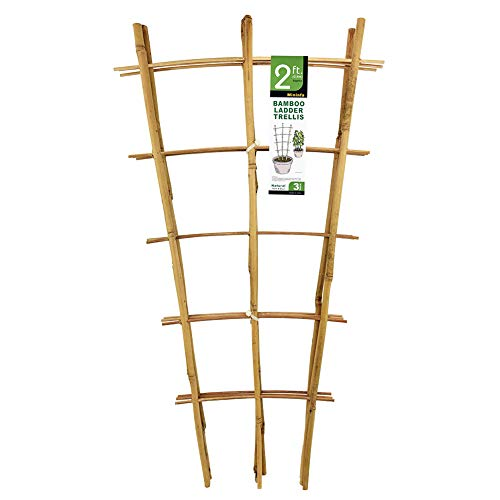Mininfa Natural Bamboo Trellis 24 Inches Tall, Garden Ladder Trellis, Plant Trellis for Climbing Plants, Vegetables, Pots - 3 Pack (Suppliers Trellis)