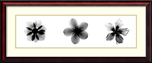X-ray Frangipani Triptych - 2