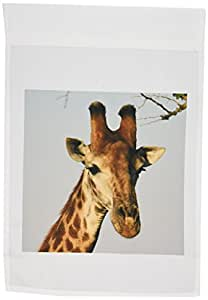 3dRose fl_20123_1 South African Giraffe Head Face Sky Background Garden Flag, 12 by 18-Inch