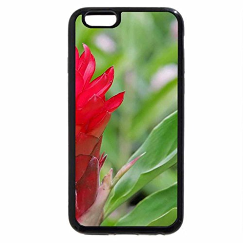 iPhone 6S / iPhone 6 Case (Black) Red Exotic Flower