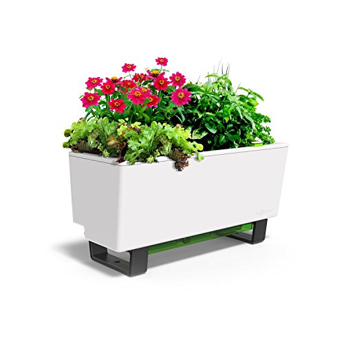 Glowpear Urban Garden Self-Watering Mini Bench Planter