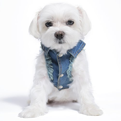designer-jean-jacket-for-dogs-by-united-pups-chill-pups-large